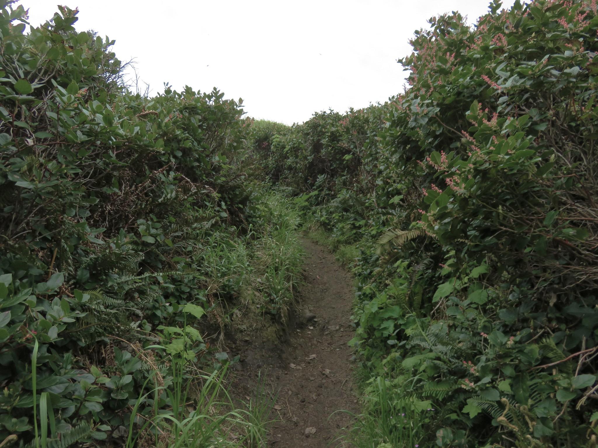 Trail out Cape Falcon