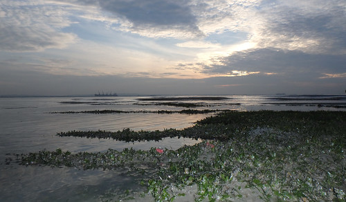 Sunrise over Changi seagrass meadows