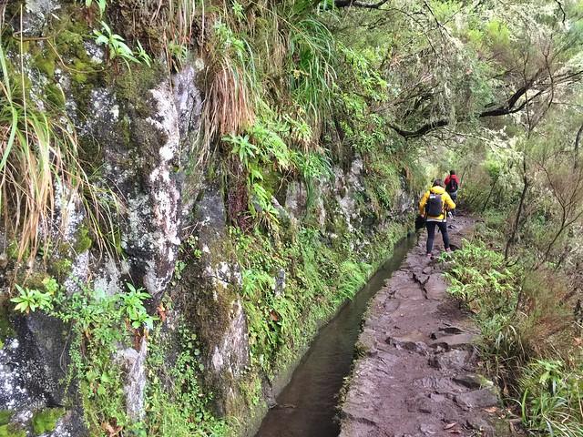 Levada del Calderón Verde en Madeira