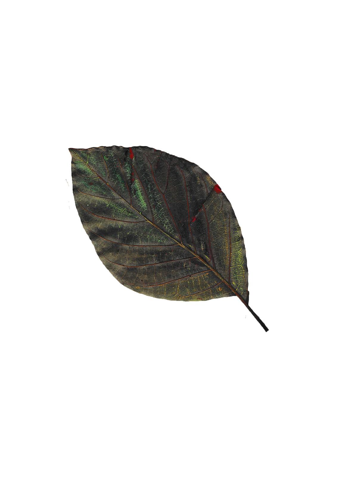 Study: Leaves