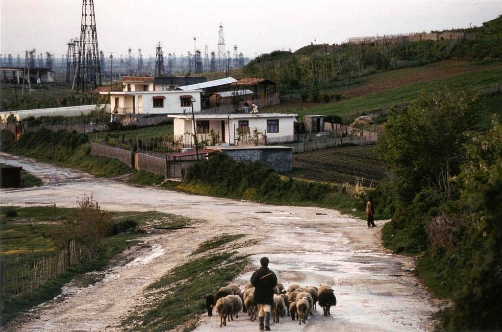 Resultado de imagem para patos, albania