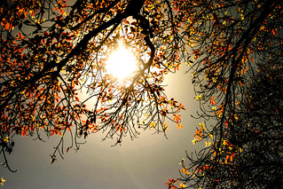 Autumn Sun | by Samie28