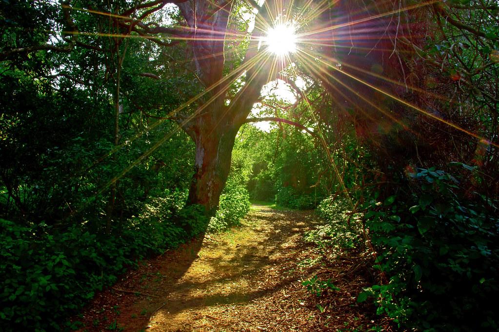 Sunburst On A Tropical Forest Path Taken In Gwalgwala Fore