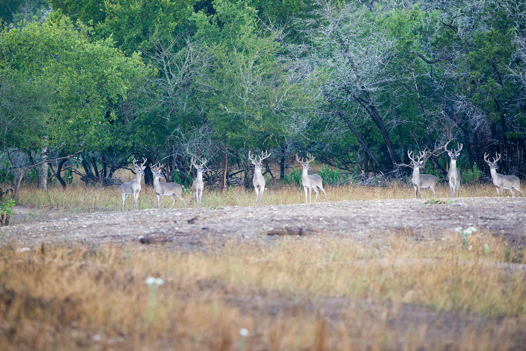 San Angelo Big Cat Contest Results