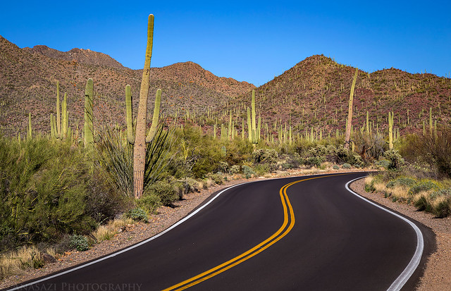Saguaro Road