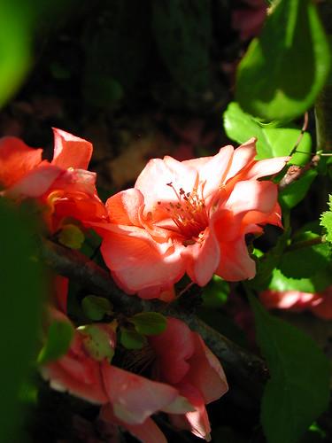 renouveau printanier au jardin - Page 2 33144992604_ba2806a2e3