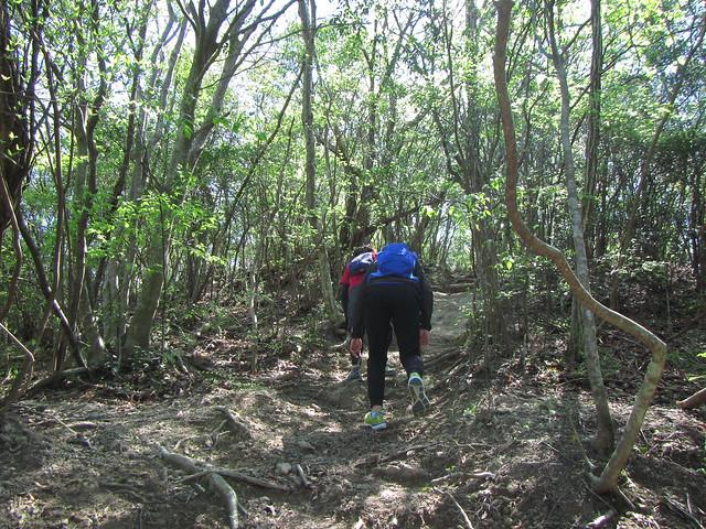 大岩ヶ岳 トレラン (23)