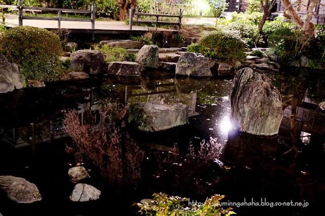 中島丁公園 夜桜 池に映る桜