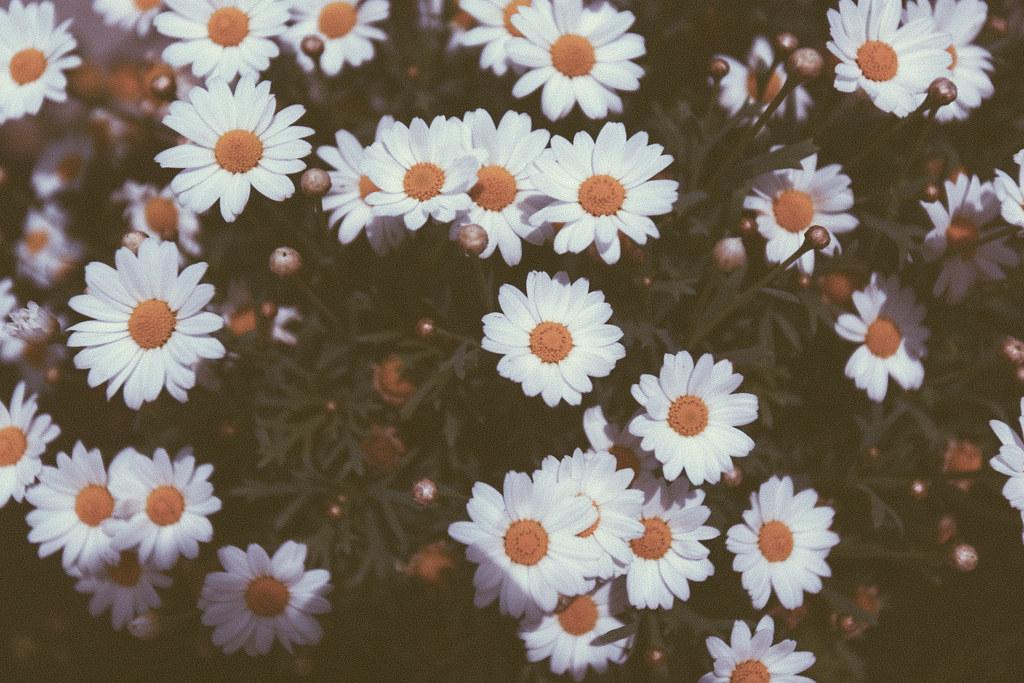 Instagram Com Wild Floral Design Brooklyn