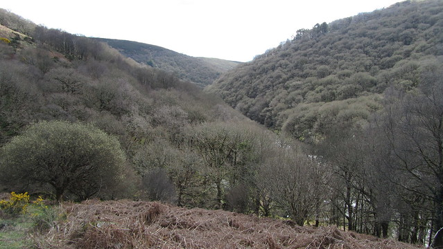 Looking up the Dart from