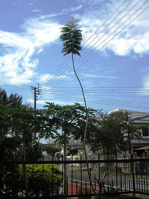 Tall branch