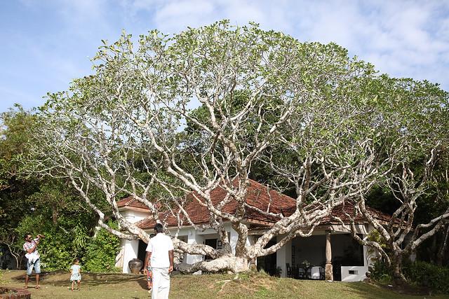 PW-Ceylon-Bawa6