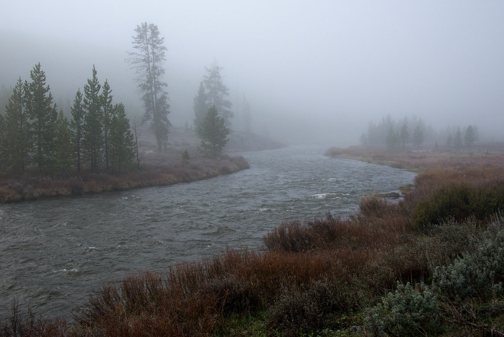 In a Fog   © Darlene Bushue - All of my images are protected