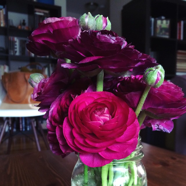The mason jar of ranunculus on our coffee table makes me so happy. #thankstraderjoes