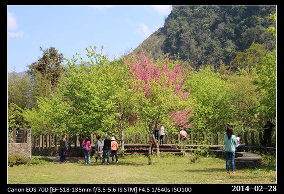 20140228_CherryBlossom7