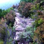 Le vieux chemin Capeddu - Punta Finochjaghja