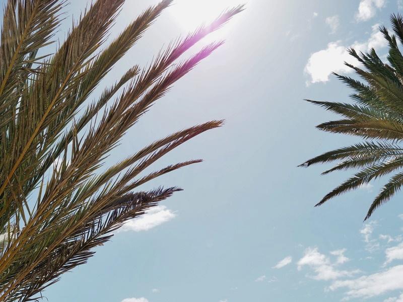 palm-trees-palmuja-teneriffa