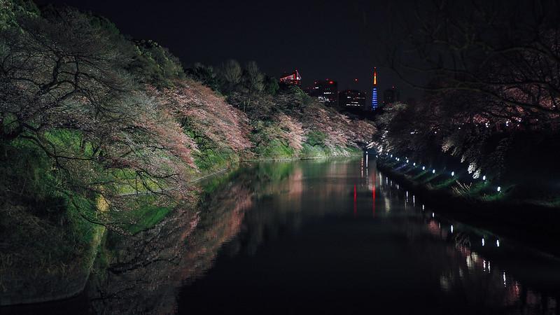 Chidori Ga-fuchi 千鳥之淵|東京 Tokyo