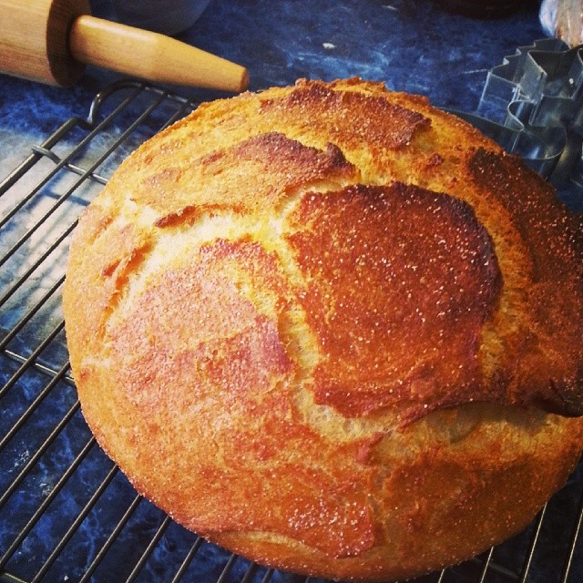 Portuguese-American Yeasted Cornbread is finished. #breadm… | Flickr