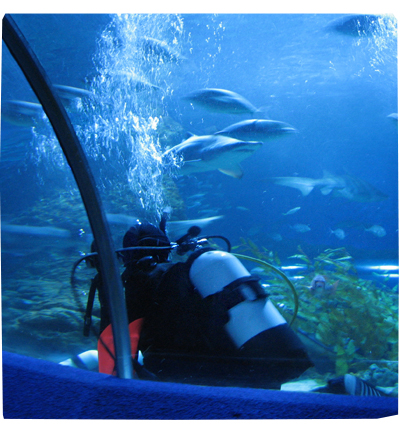 Dive With Sharks at AQWA (2008)