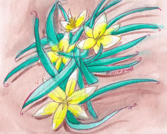 4.20.17 - Tulip Study