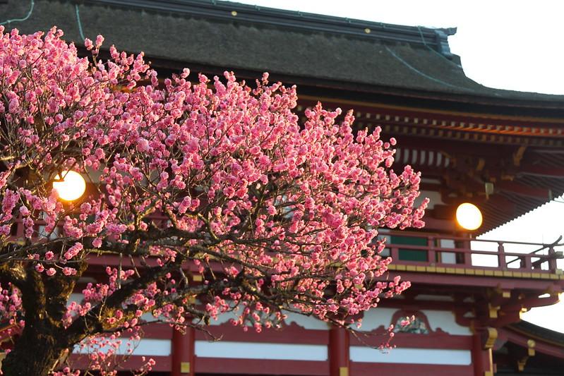 梅の花と大宰府天満宮