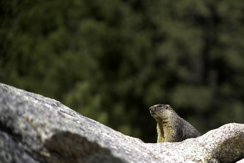 2017 4 16 - Marmot - 9S3A2861 | by Rags Edward