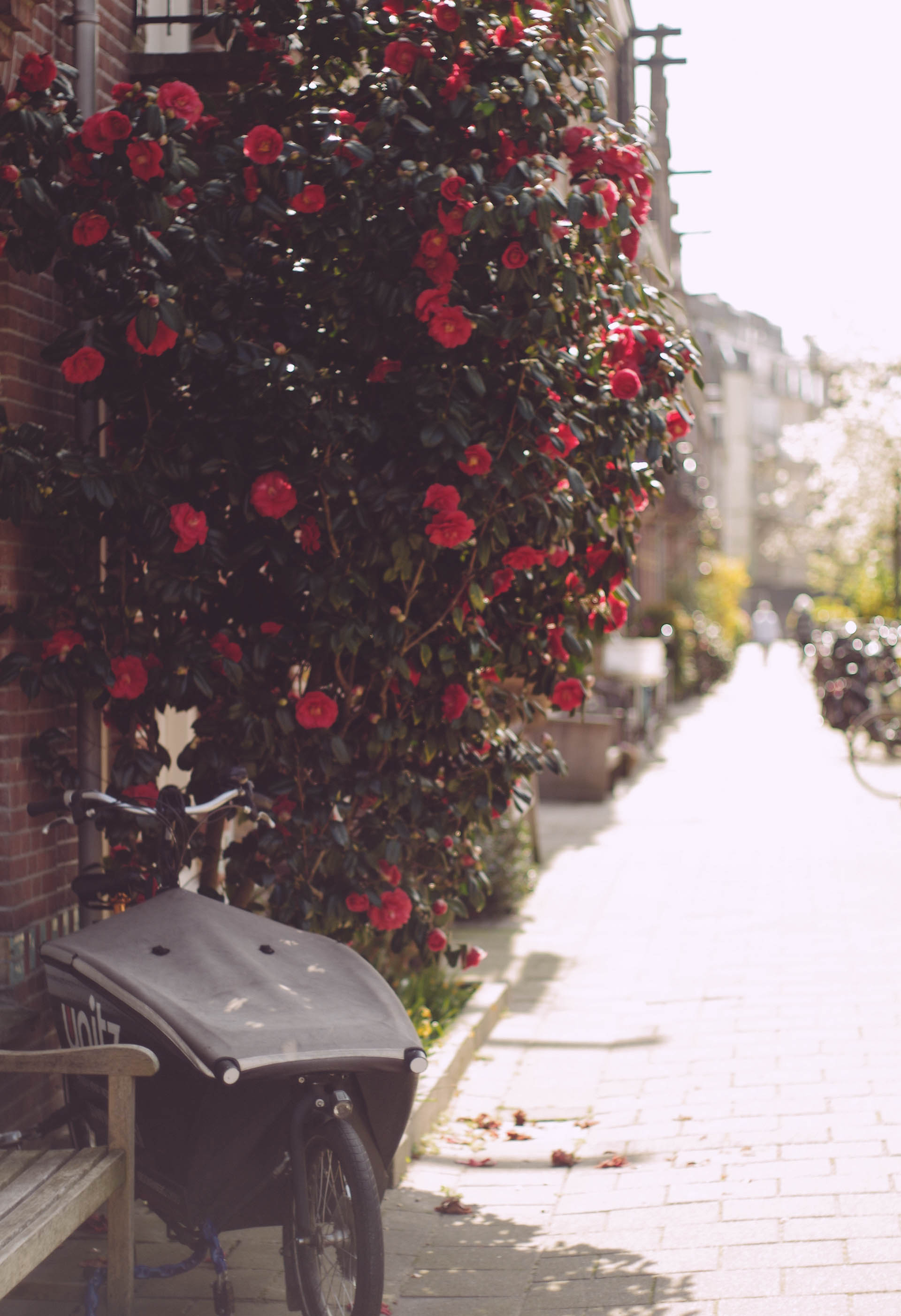Amsterdam, Spring in Zuid