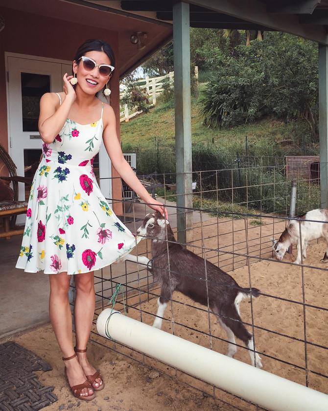 surfing baby goat dairy farm maui hana