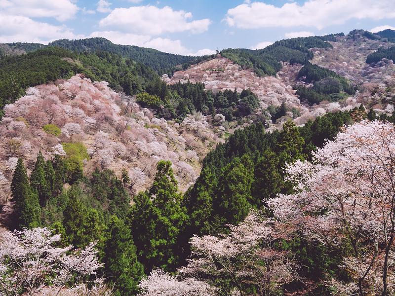 Du lịch Nhật Bản tự túc mùa hoa anh đào