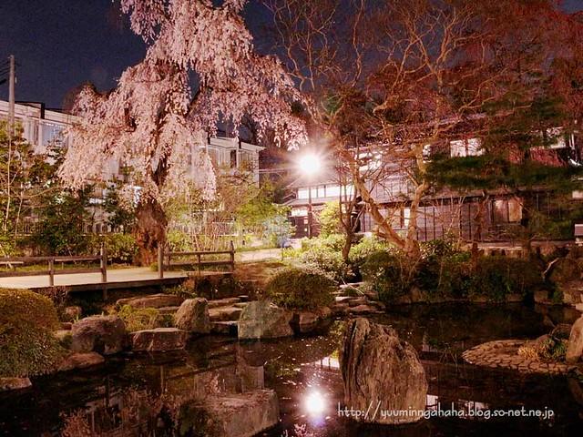 夜桜 杜の館