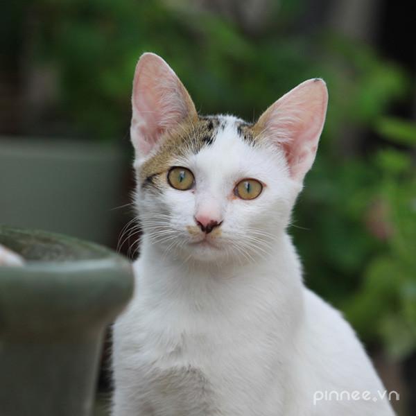 purrfect pals cat shelter