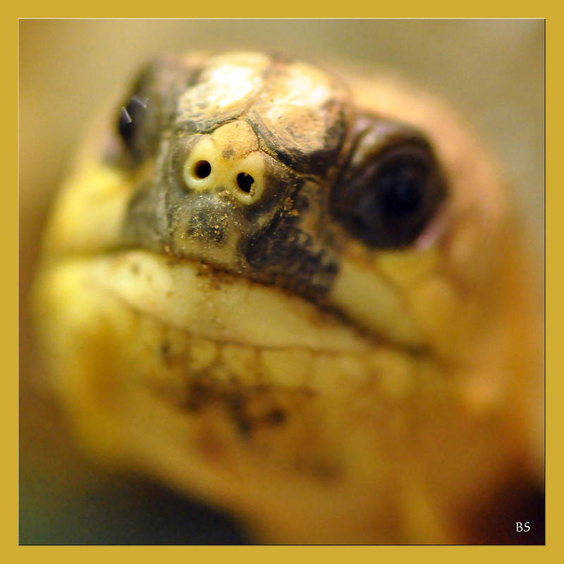 Schildkröten-Nasenlöcher, Foto: Brigitte Stolle