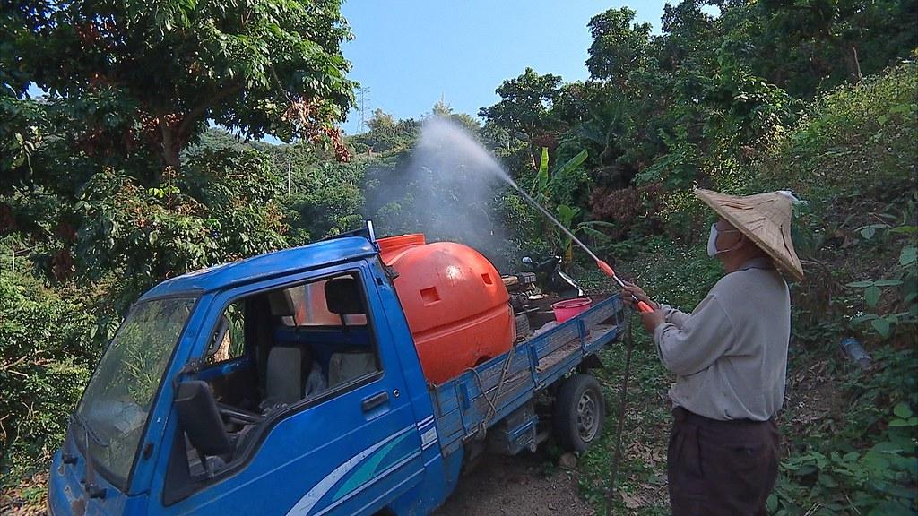 想趕走荔枝椿象,老農林東裕載來一車藥水,啟動馬達,將藥水灑向樹梢。