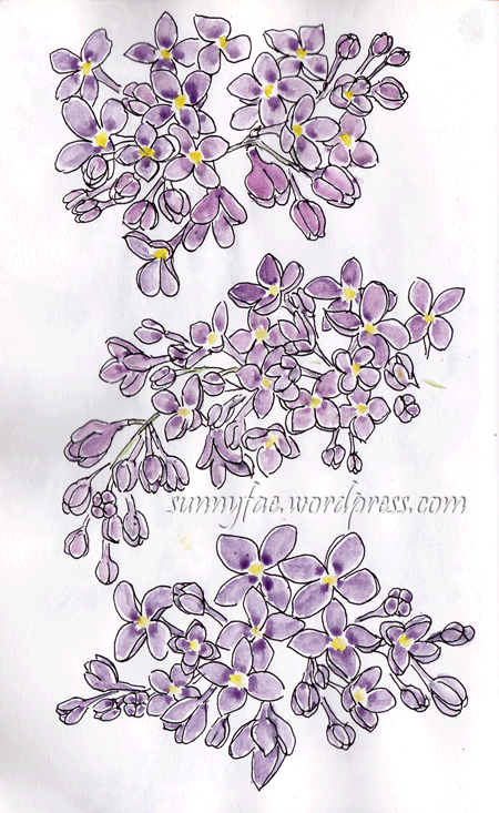 lilac flower heads