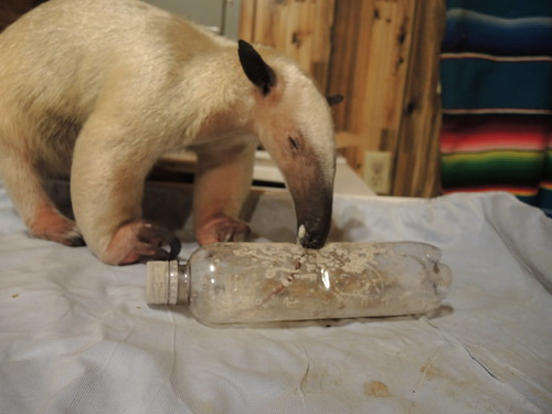 Anteater enrichment