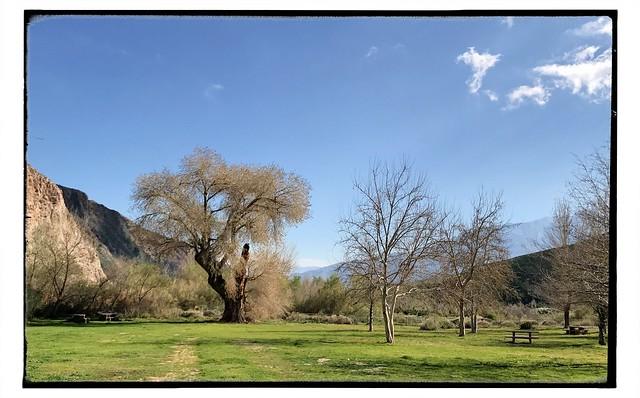 Impressive willow tree.
