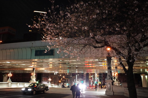 Nihonbashi bridge sakura night viewing 04