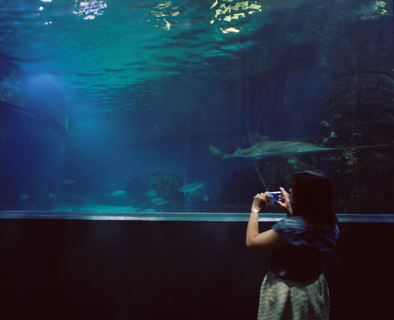 Melbourne Aquarium iv