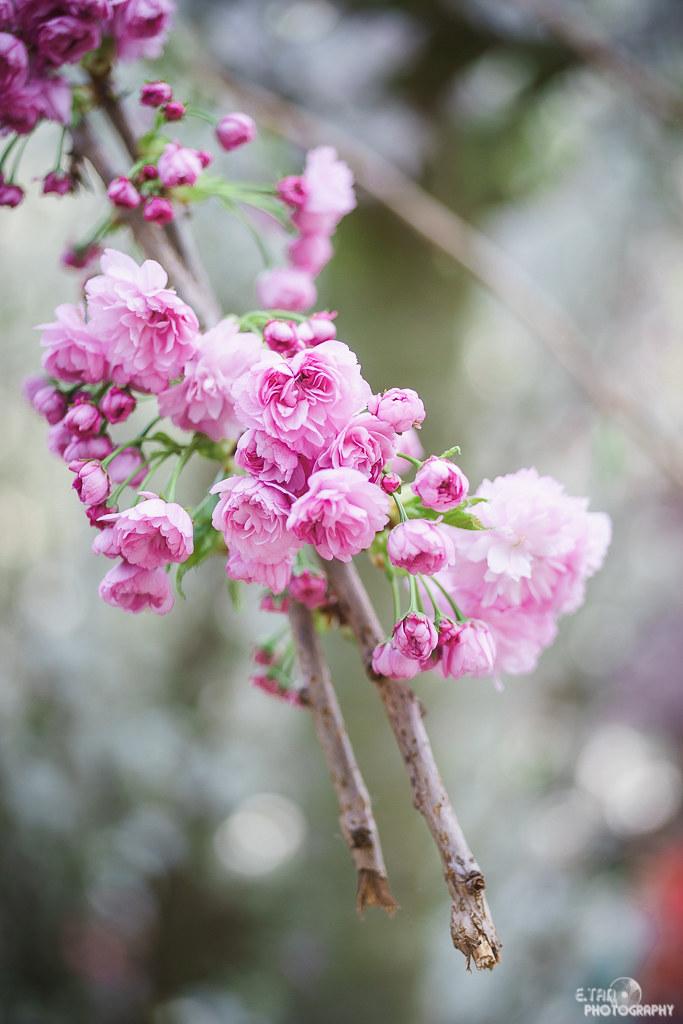 Blossom Bliss - 015
