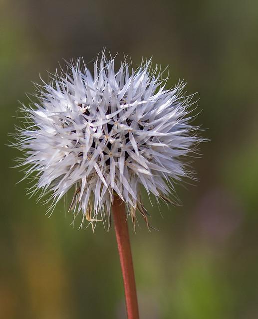 Wild-Flower-23-7D2-040817
