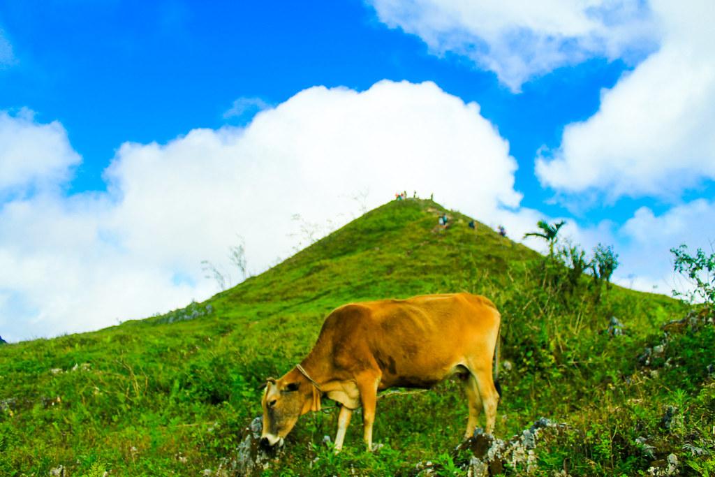 Osmena Peak, Dalaguete, Cebu-31