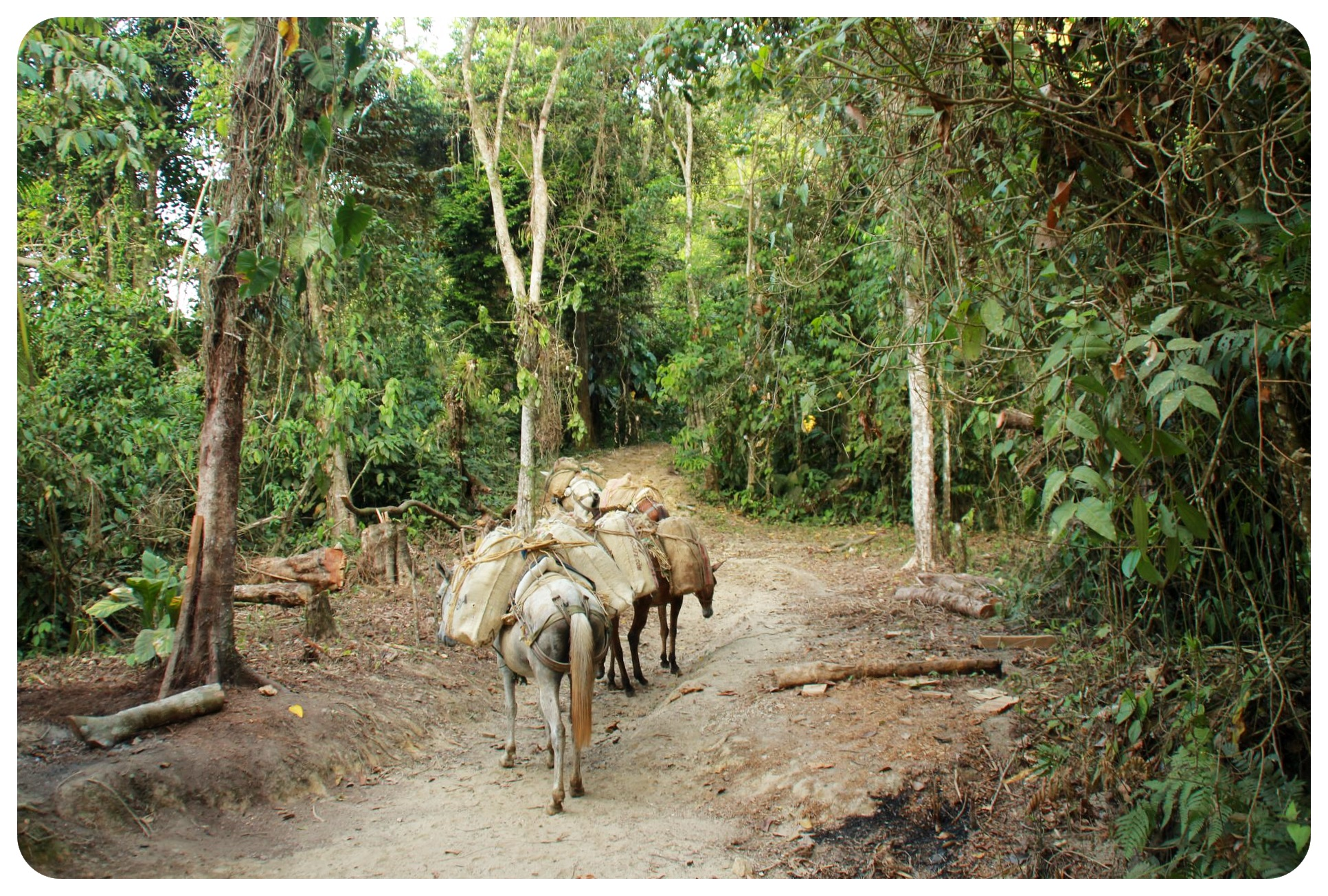 lost city trek horses colombia