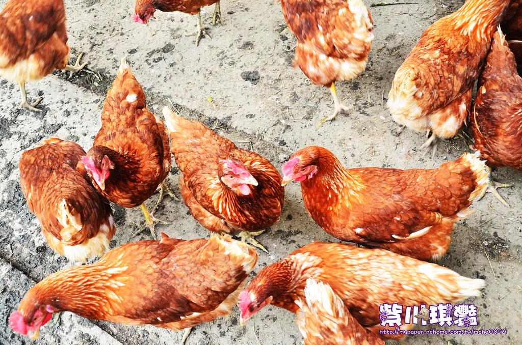 福壽農場商品-003
