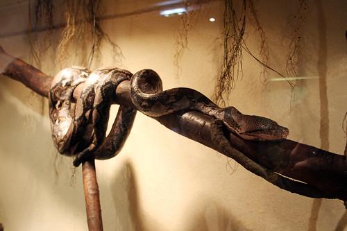 Natural History Museum Nantes