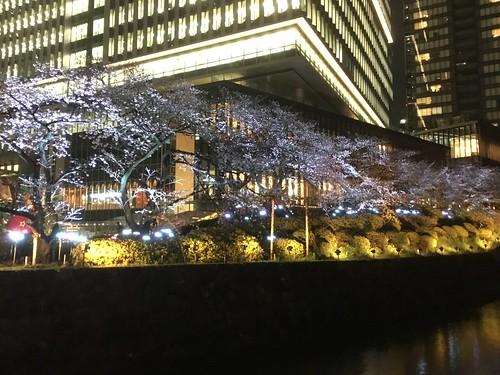 東京ガーデンテラス紀尾井町の桜 2017.4.3