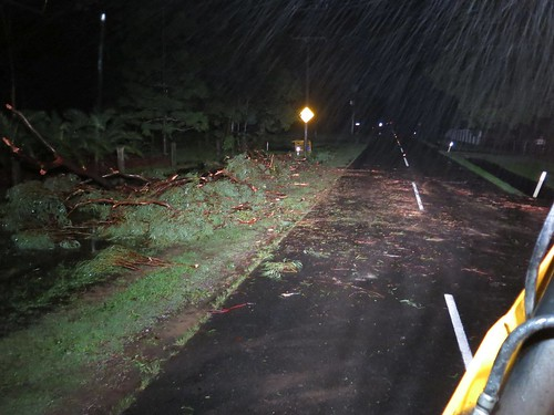 Road cleared after tree removal