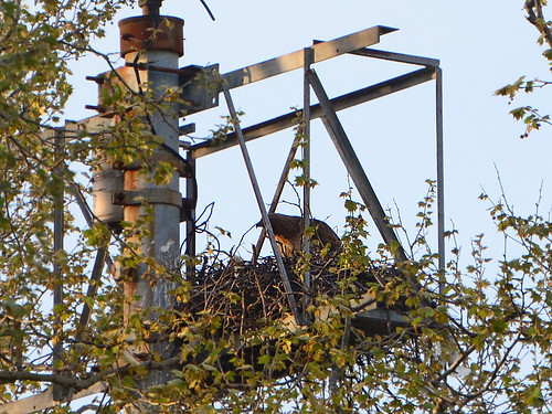 GT Hawk Nest - 2822