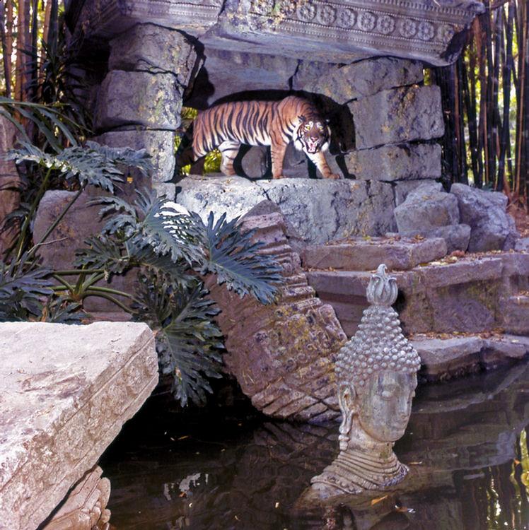 VP30-50 - Bengal Tiger In Ruins