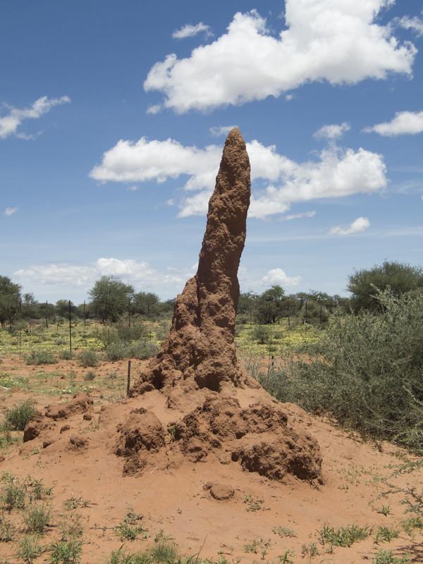 Termite nest Namibia